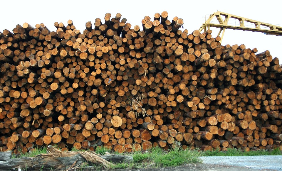 Specialty Program Solutions - Canadian Softwood Lumber - Logs Piled